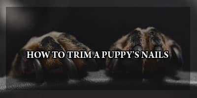 How to Trim A puppy's Nails